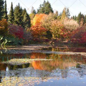 Fall paradise Photo