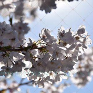 Spring Sprung Photo