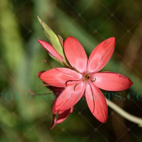 Flower Power Photo