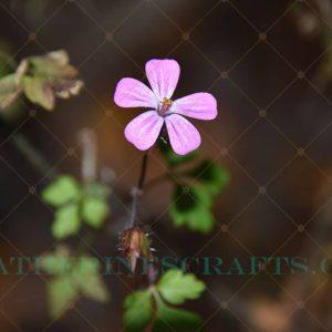 Little Beauty Photo