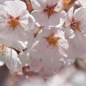 Pink Bloom Photo