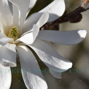 Spring Bloom Photo